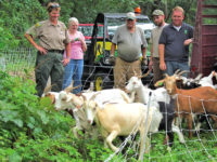 'Goats on the Go' make McIntosh Woods State Park their new home away from home
