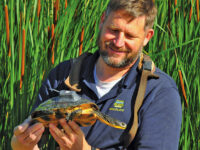Study aims to benefit threatened turtle